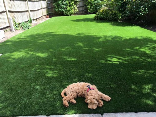 dog lying on artificial grass